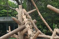 新竹市立動物園03