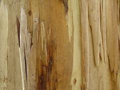 DSC05258 (davin.larkin) Tags: victoria greatoceanroad lorne