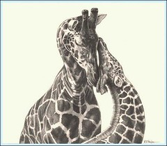 'A Tender Moment' - Giraffes - Fine Art Pencil Drawings  www.drawntonature (kjhayler) Tags: pictures africa family wild portrait blackandwhite baby art nature monochrome animal animals pencil portraits painting sketch photo babies photos drawing african wildlife paintings young picture drawings naturalhistory giraffes prints giraffe sketches calf herd animalart wildanimals motherandbaby girraffe animalprints girafes africanart pencildrawings wildlifeimages babygiraffe drawingpictures animalpictures wildlifeart africanwildlife africananimals wildlifephotography wildlifephotos animalphotos animaldrawings wildlifeartists naturepictures giraffs girrafes wildlifeportraits wildpictures animalspictures openedition wildlifeartist babygiraffes wildlifedrawings drawingphotographs kevinhayler wildlifegiraffes giraffephoto giraffephotos giraffesphotos giraffebabies picturesofgiraffes giraffepictures giraffepicture giraffespictures younggiraffes