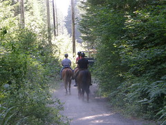 """Horses coming down towards parking lot from """"Iron Horse"""" trail. (bikejr) Tags: ironhorse cedarbutte"""