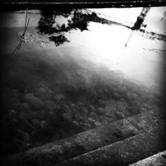 26éme centenaire (Amodalie) Tags: waterreflection llike parcdu26èmecentenaire