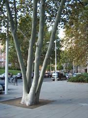Parc de Carles I (Francesc_2000) Tags: barcelona park city parque espaa garden spain europa europe village catalonia vila 1992 catalunya olympic parc jardines catalua ciutat carles jardi espanya olmpica i parcdecarlesi