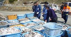 石巻再訪:ホタテの貝殻が整理されている