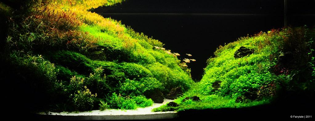 My new aquascape (570l) Page 4 AquaScaping World Forum