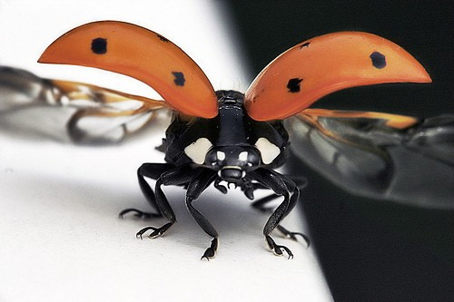 1517322756 96c4d2b48e Amazing Insects!