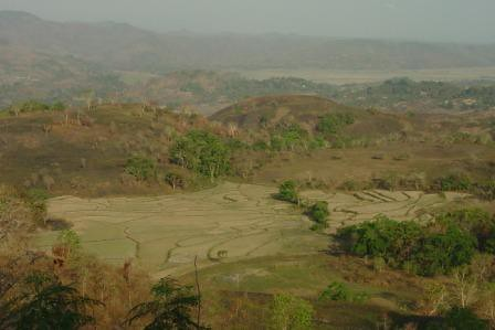 dried rice terraces