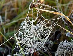 (Maria Artigas) Tags: ice spiderweb invierno gel hielo telaraa naturesfinest teranyina