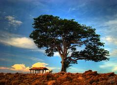 Solitudine (Jorge L. Gazzano) Tags: sky tree cores cu rvore hdr solido solitudine fotoclube duetos