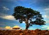 Solitudine (Jorge L. Gazzano) Tags: sky tree cores céu árvore hdr solidão solitudine fotoclube duetos