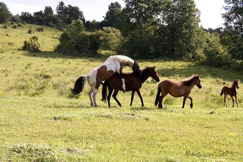 Atlarda Üreme