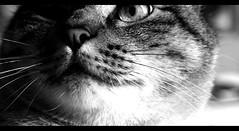 (: metamorfosis :) Tags: blancoynegro animal ojo bi