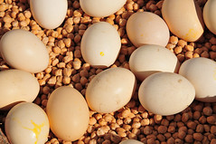 real eggs real life (luca.gargano) Tags: voyage travel morocco maroc eggs marocco maghreb souk exploration viaggio gargano morokko lucagargano poischich