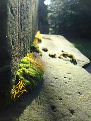 Tomb (Moser's Maroon) Tags: cemetery grave graveyard stone mos germany deutschland moss dof graf depthoffield duitsland steen begraafplaats artisticexpression badarolsen arolsen