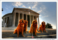 Washington's Faithful (Nikographer [Jon]) Tags: washingtondc dog dogs 2008 mar march 20080322d30016322 tonemapped hdr 3exp d300 nikon tokina1224mmf4 13mm jeffersonmemorial steps sun 4 four photomatix jss20081 nikond300
