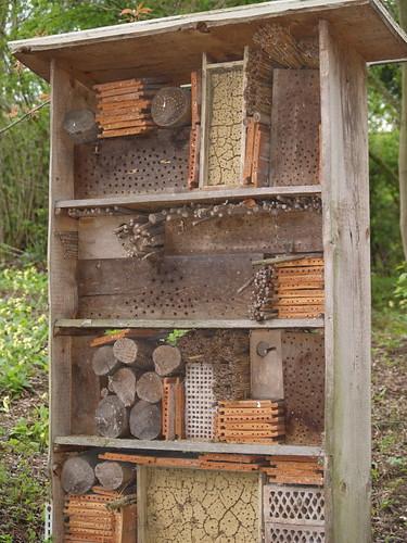 Nymphaea: Wildbienenhaus