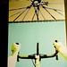 Tiago DeJerk artwork at Cyclepath Bike Shop-10.jpg