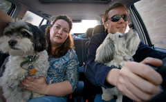 Family: Tom Tom POV (the other Martin Taylor) Tags: family dogs car roadtrip desi traveling babalu theothermartintaylor mybluemuse pjtaylor pattitaylor pad2008apr