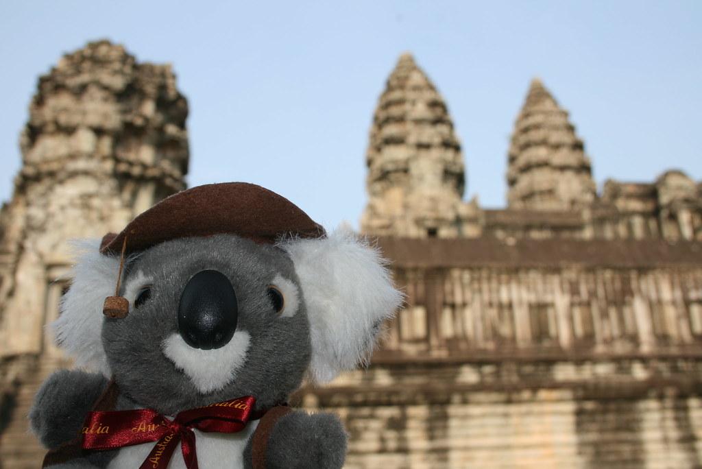 koala viajero