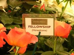 Fellowship Roses