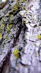 P1000964_RT (fiveten) Tags: detail michigan upperpeninsula mundane mundanedetail ironriver findingthedetails mundanede