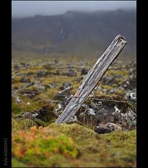 EXPLORED: Volcanic Pasture (KSGarriott) Tags: ksgarriott scottgarriott olympus omd em5ii iceland island lava volcanic autumn fall høst fence post landscape 1240mm