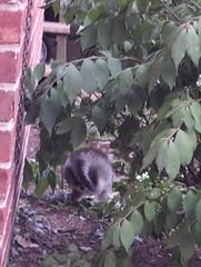 a kitten under the bush