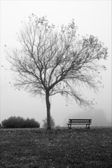 Árbol + Banco + Niebla (DavidGorgojo) Tags: bw tree fog banco bank bn galicia árbol niebla ribadeo cargadeiro ostrellina