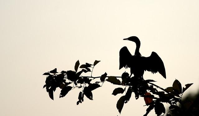 black beauty...