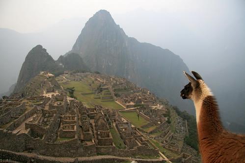 Machu Picchu pecora
