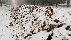 Pile of Snowey Leaves (Petunia21) Tags: brown snow newyork leaves car headlights pile roadside rockland rocklandcounty nanuet december132007 southparkavenue lexowavenue