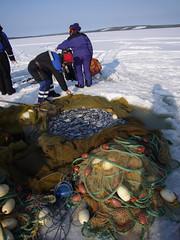 pesca su ghiaccio in lapponia 001 (arcticroute.com) Tags: winter fishing rovaniemi arctic lapland pesci neve inverno pesca viaggio icefishing arcticcircle finlandia artico ghiaccio lapponia circolopolare circolopolareartico retidapesca arcticroute pescasughiaccio viaggioinlapponia