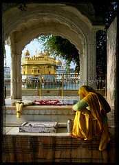 Devotion along the Sarovar (designldg) Tags: woman india temple golden colours religion punjab amritsar breathtaking sikhism goldentemple indiasong hourofthediamondlight fiveflickrfavs