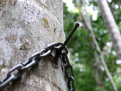 Nail (phempsall) Tags: sea rainforest australia boardwalk acres portmacquarie seaacres