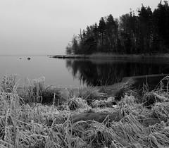 Almost freezing (d.lindholm) Tags: winter blackandwhite bw cold reflection ice water grass sweden horizon brrrr kalmar nikon18200mm kalmarsund nikond40x
