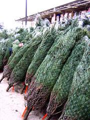 Christmas Tree Pods