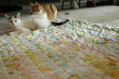 Strip Quilt (plus cats)