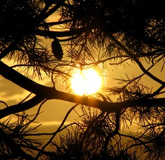 Tenderly embraced... (michaelab311) Tags: sunset sun tree love topf25 golden evening hug searchthebest framed memories warmth frame hugs lovely embrace schwarzwald blackforest baum tender tenderness rahmen tannenzapfen zweige umarmung iloveit themoulinrouge naturesfinest wrme framedsunset 25faves golddragon platinumphoto impressedbeauty michaelab311 diamondclassphotographer ysplix theunforgettablepictures thegardenofzen michaelab