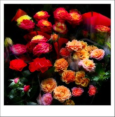 Flowers Seller (Visualtricks) Tags: red roses orange black green yellow shop colours florist flickrstar golddragon mywinners abigfave flickrgold platinumphoto