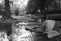 naturaleza (Analía Acerbo Arte) Tags: naturaleza blancoynegro rio agua árbol