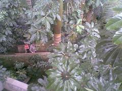 USBG Jungle