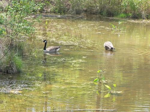 Wake County Crowder District Park 043