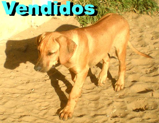 080414_Triguinho_02_Small_Labeled