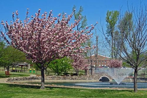 Spring In Mena 8