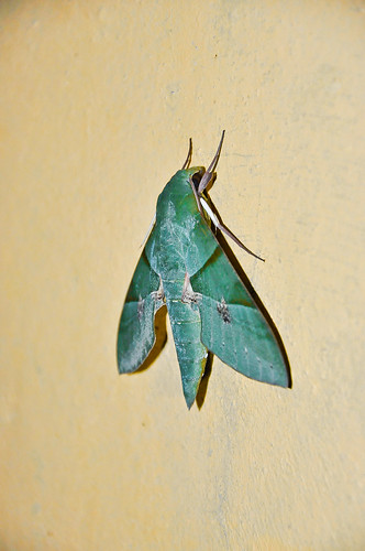 Mariposa verde (02)