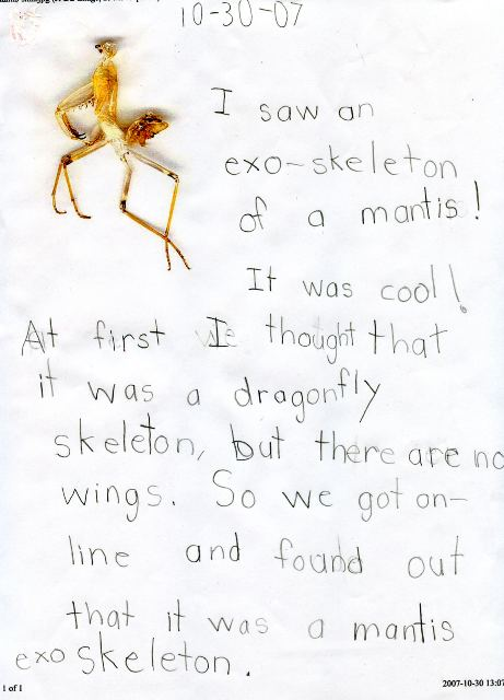 nature journal -- mantis exoskeleton