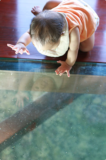 水上コテージのガラス床