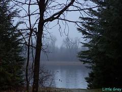 hazy (Little Grey) Tags: autumn fall nature river orleans ottawa elpaso hazy thebigone earthnature onlynature photosandcalendar awesometrees freenature goodtimesandpeople 5millionphotos alookoftheworld