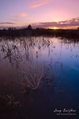 Sunset over wetlands (Joop Snijder) Tags: trees sunset nature water netherlands river landscape outdoors evening daylight flood arnhem scenic nobody swamp wetlands rhine gelderland vibrantcolor horizonoverwater aplusphoto