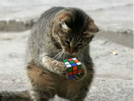 All Your Rubiks Are Belong To Me