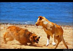 Just Leave Me Alone!! (B'Rob) Tags: chile city dog streetart art beach true garden photography valparaiso mar photo yahoo google fight nikon funny flickr paradise viña picture jardin ciudad best wikipedia eden pelea valparaíso paraiso jardín viñadelmar d40 brob brobphoto